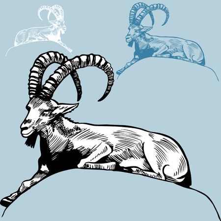 Ram Drawing : Hand drawn ram with large horns sitting on a rock.