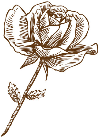 Rose Drawing Six : Beautiful hand drawn rose bloom stem with leaves in a sepia tone.