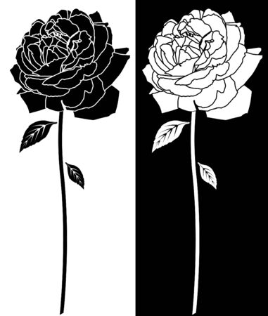 black and white line drawing: Rose Black White Drawing