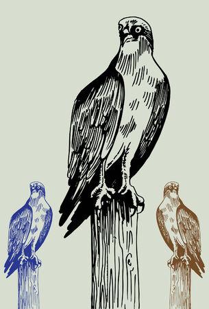 perching: Osprey Bird