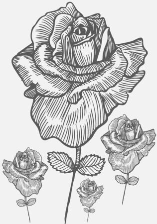 Rose géant Banque d'images - 5326217