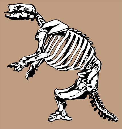 fossil: Huesos f�siles de