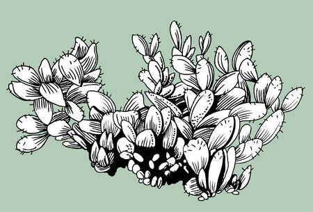 Cactus Illusztráció