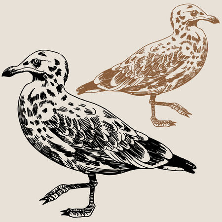 Seagull Drawing Brown