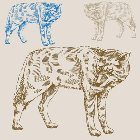 Wolf Drawing Illustration