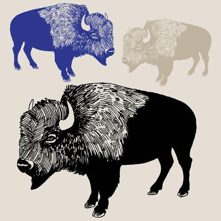 bison: Bison