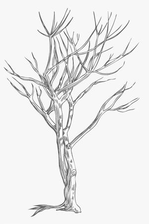 Tree Drawing Stock Vector - 5358976
