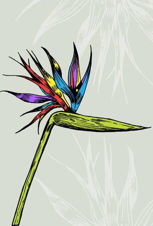 Paradijs vogel bloem