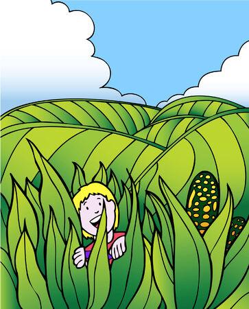 corn field Stock Vector - 5376819