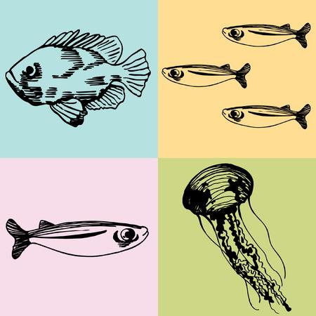 sardine: Fish Drawings