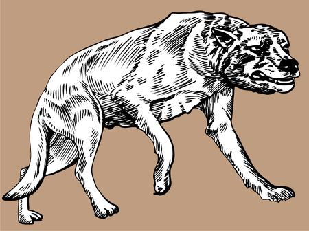 DIre Wolf Illustration