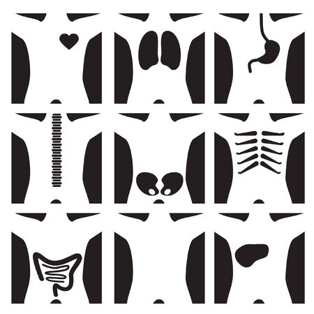 XRay Set Stock Vector - 5446081