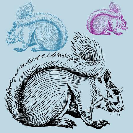 Squirrel Фото со стока - 5540856