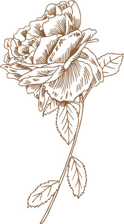 Rose Stem Drawing