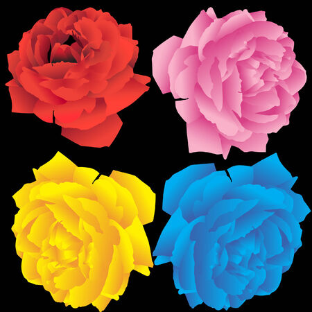 Rose Drawing Set vibrant