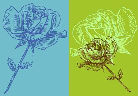 rose: green Rose Drawing Illustration