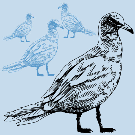 Seagull image in a hand drawn style.