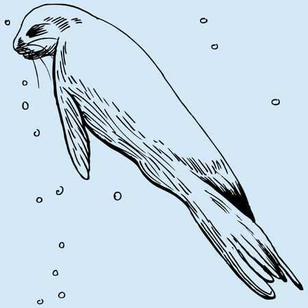 Seal image in a hand drawn style. Vector