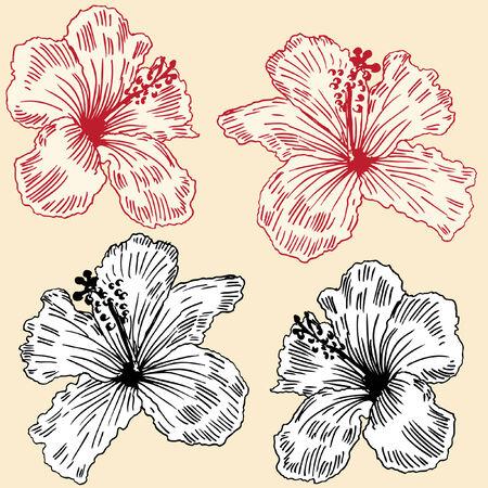 Orchidées florales isolées sur un fond jaune. Banque d'images - 5673371