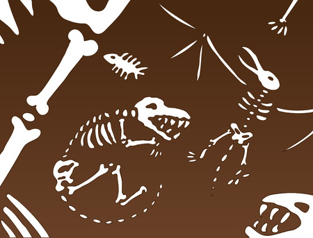 Informations fossiles de dinosaures ancienne demeure sous le sol.