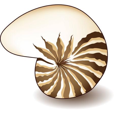 nautilus shell: Nautilus shell isolated on a white background. Illustration