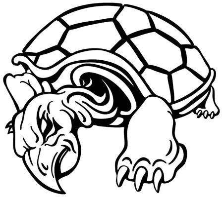 Angry Turtle photo