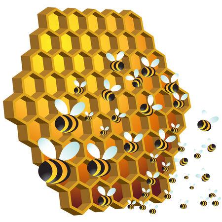 miel et abeilles: Abeilles mellif�res  Illustration