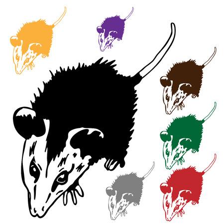 possum: An image of a possum. Illustration