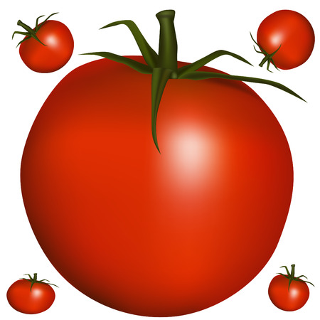 An image of a realistic tomato.