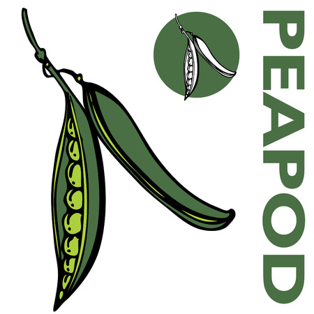 peas in a pod: An image of a peapod Illustration