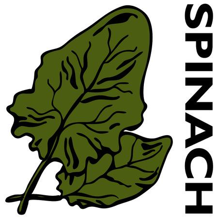 시금치 잎의 이미지입니다. 일러스트