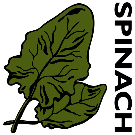 spinach: An image of leaves of spinach.