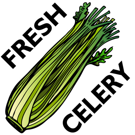 An image of a stalk of celery. Vector