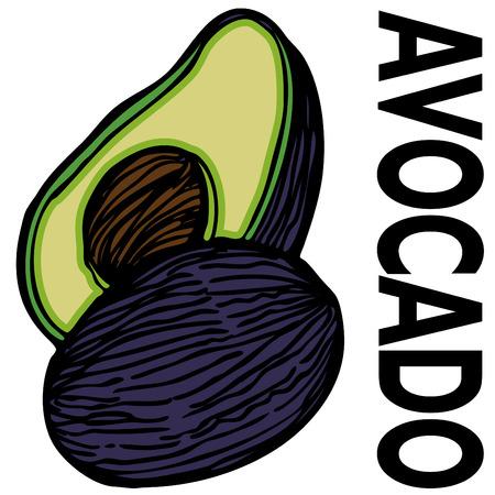 An image of a avocado. Stock Vector - 8058167