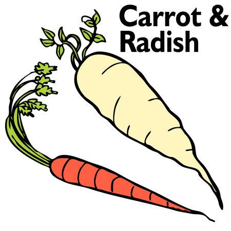 Een afbeelding van een radijs en wortel. Stock Illustratie