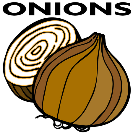 onions: An image of two onions. Illustration