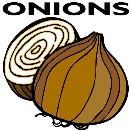 cebollas: Una imagen de dos cebollas.  Vectores