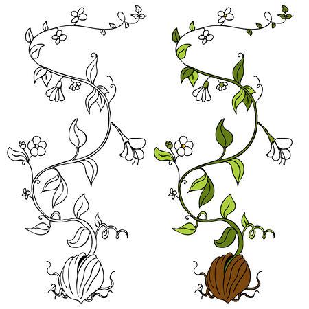 Une image d'une plante de plus en plus hors d'une graine. Banque d'images - 8512586