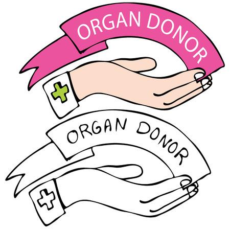 Een afbeelding van een hand met organ donor banner.