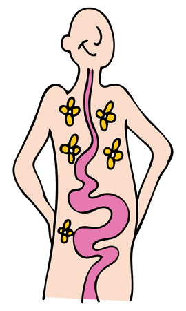 intestinal flora: An image of a person with a healthy digestive system. Illustration