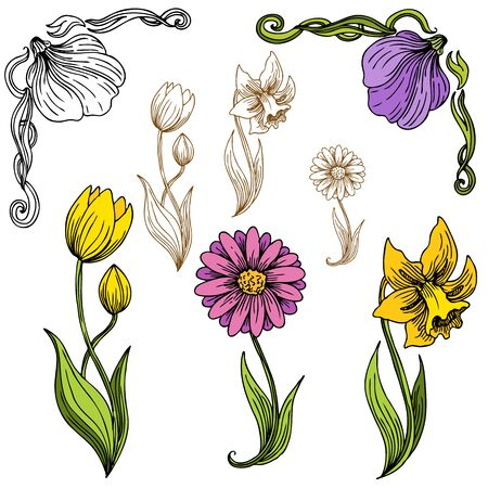 daffodils: An image of a  Illustration