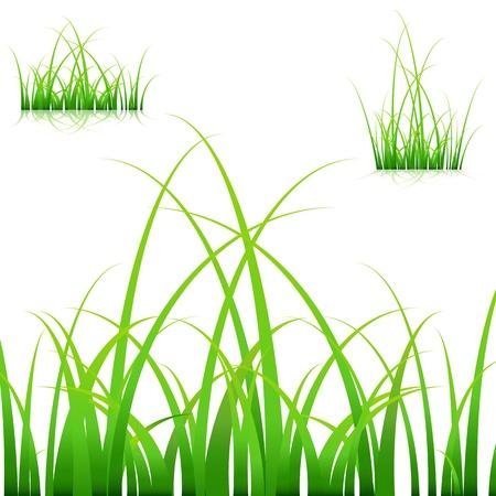 白い背景の上の草の葉の一連の画像。