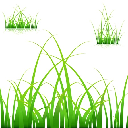 An image of a set of blades of grass on white background.