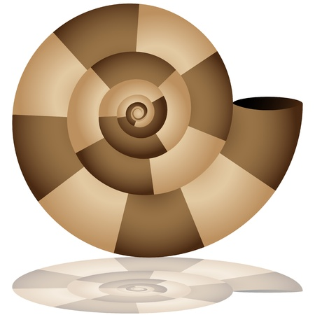 An image of a nautilus shell icon with drop shadow. Vector