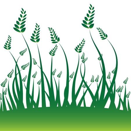 An image of a wheat grain background. Çizim