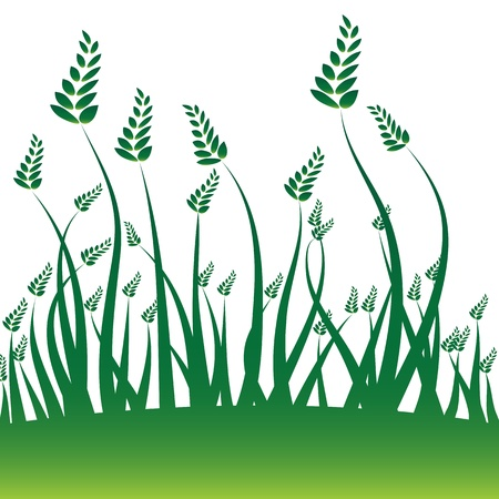grain: An image of a wheat grain background. Illustration