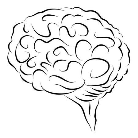 An image of a elegant human brain design element. Stock Vector - 9518140
