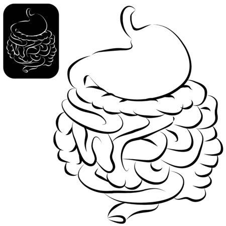 カリグラフィ ブラシ ストローク スタイルで人間の消化器系のイメージ。