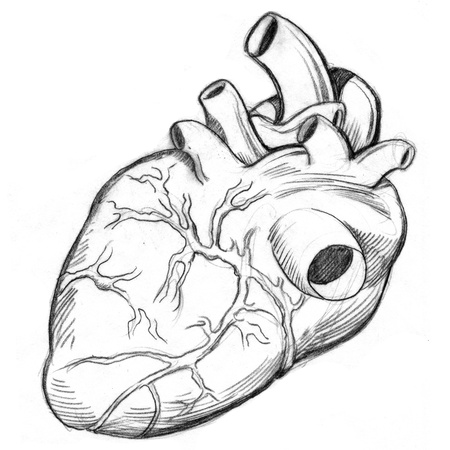 heart drawing: An image of a human heart drawing. Stock Photo