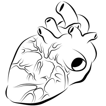 drawing: An image of a human heart ink drawing.